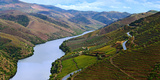 Vineyards Along Douro River, Near Coa Valley Fotografisk tryk af Babak Tafreshi