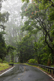 Hawaii, Maui, the Lush Road to Hana Reproduction photographique par  Design Pics Inc