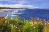 Wildflowers Along Yaquina Head; Newport Oregon United States of America Photographic Print by  Design Pics Inc
