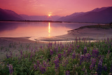 Sunrise Twentymile River and Lupine Sc Ak Summer Scenic Reproduction photographique par  Design Pics Inc