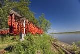Red Salmon Hang on Drying Rack Along Kuskokwim River Shoreline Subsistence Fishing We Alaska Summer Fotoprint van  Design Pics Inc