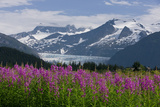Scenic View of Mendenhall Glacier with Fireweed in the Foreground Photographic Print by  Design Pics Inc