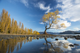 A Lone Cottonwood Tree on Stands on the Bank of Lake Wanaka Photographic Print by Michael Melford