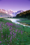 Fireweed in Bloom Along Pond with Chugach Mtns Sc Ak Summer Photographic Print by  Design Pics Inc
