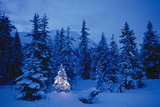 Spruce Tree in Forest with Christmas Lights Ak Winter Photographic Print by  Design Pics Inc
