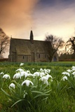 White Flowers with a Small Church in Background Photographic Print by  Design Pics Inc