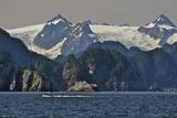 Kenai Fjords Tour Boat in Resurrection Bay Near Seward, Alaska During Summer Photographic Print by  Design Pics Inc
