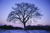 Silhouette of a Tree at Sunset in Winter Photographic Print by Rebecca Hale