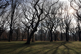 The Sun Shines Through Bare Winter Trees in New York City's Central Park Photographic Print by Robbie George