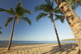 Hawaii, Lanai, Hulopoe Beach, Tall Palm Trees on a Beautiful Beach Photographic Print by  Design Pics Inc