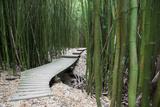 Hawaii, Maui, Kipahulu, Haleakala National Park, Trail Through Bamboo Forest on the Pipiwai Trail Photographic Print by  Design Pics Inc