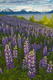 Scenic View of Turnagain Arm and Chugach Mountains Near Bird Point with Lupine Meadow Photographic Print by  Design Pics Inc