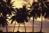 Sunset (Palm Trees in Silhouette),Aitutaki,Cook Islands Fotografisk tryk af  Design Pics Inc