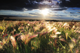 Grasses Blowing in the Wind, South Park, Colorado Photographic Print by Keith Ladzinski
