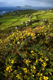 Wildflowers and Green Fields Along Darrynane Bay, Ring of Kerry, Ireland Photographic Print by Chris Hill