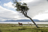 Horses on a Ranch in Patagonia Photographic Print by Tomas Munita
