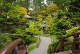 Bridges Link the Paths in the Japanese Tea Garden, the Oldest Public U.S. Japanese Garden Fotografisk trykk av Krista Rossow