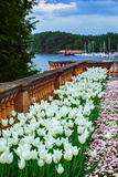 White Tulips in the Historic Schwerin Palace Photographic Print by Babak Tafreshi