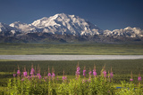 Mt.Mckinley and the Alaska Range with Fireweed Flowers Photographic Print by  Design Pics Inc