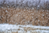 Close View of Snow Falling in Colorado Springs Photographic Print by Keith Ladzinski