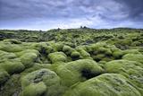 Moss-Covered Lava Field in Vik, Iceland Fotografisk tryk af Keith Ladzinski