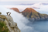 Atlantic Puffins, Fratercula Arctica, in a Coastal Landscape Partly Covered by Sea Fog Reproduction photographique par Erlend Haarberg