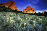 Yuccas Blooming in Garden of the Gods, Colorado Photographic Print by Keith Ladzinski