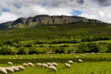 Sheep Graze Below Binevenagh Mountain in Roe Valley, County Londonderry, Northern Ireland Papier Photo par Chris Hill