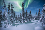 A Scenic View of a Snowy Forest with the Aurora Borealis Overhead Fotografisk tryk af Peter Mather