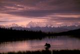 Alaska Range Moose Bull Wonder Lake Denali Natl Park Interior Alaska Summer Trees Snow Reproduction photographique par  Design Pics Inc