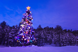 Decorated and Lit Christmas Tree in a Spruce Forest in Tres Piedras Photographic Print by  Design Pics Inc