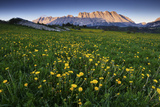 Meadow with Yellow Flowers and Mountains in the Distance, Near Gap, France Photographic Print by Keith Ladzinski