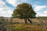 A Wild Filly Is Tied to a Tree in Estancia Cameron in Tierra Del Fuego Photographic Print by Tomas Munita