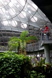 Visitors Look at an Exhibit in the Rainforest of the California Academy of Sciences Photographic Print by Krista Rossow