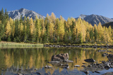 Mountain Pond Reflecting Fall Colours of Glowing Larch Trees with Mountains Photographic Print by  Design Pics Inc