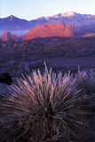 Frost-Covered Yucca at Sunrise in the Garden of the Gods, Colorado Photographic Print by Keith Ladzinski