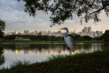 A Great Egret Looks Out over a Lake in Sao Paulo's Ibirapuera Park Photographic Print by Alex Saberi