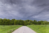 A Gravel Road Disappears into a Field of Trees Beneath a Stormy Sky Photographic Print by Jim Reed