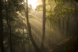 Sunlight Streaming Through a Misty Forest Photographic Print by Richard Olsenius