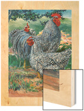 A View of Barred Plymouth Rock Chickens, One of the Seven Varieties Wood Print by Hashime Murayama
