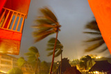A Long Exposure at Night of Hurricane Jova's Winds Battering Palms Photographic Print by Mike Theiss
