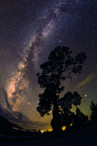 The Milky Way Arches over the Silhouette of a Sacred Pine Fotografisk tryk af Babak Tafreshi