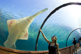 A Woman Points to a Carpenter Shark, or Sawfish, Swimming over an Underwater Tunnel Photographic Print by Mike Theiss