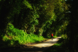 A Man Cycles Along a Leafy, Sun-Freckled Lane Near Winchelsea, East Sussex Photographie par Roff Smith