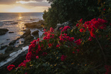 The Southwest Coast of Jamaica Photographic Print by Matt Propert