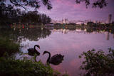 A Pink Sunset with Two Black Swans in Ibirapuera Park Lake with Sao Paulo Cityscape Behind Photographic Print by Alex Saberi