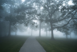 A Path Through a Foggy Landscape of Lawn and Trees Photographic Print by Richard Olsenius