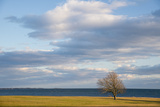 A Lone Tree Stands on the Shore of Long Island Sound at Harkness State Park Photographic Print by Michael Melford