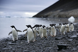 Adelie Penguins Walk on a Beach on Devil's Island Photographic Print by Jim Richardson