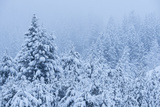 Snowfall in the White Cloud Mountains Photographic Print by Michael Melford